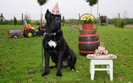 Gvido Jr.'s second birthday party in Alfa Dog School